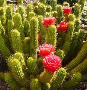 desert-bloom-image